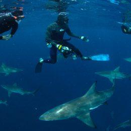 Shark snorkel - Swimming with Sharks at Durban