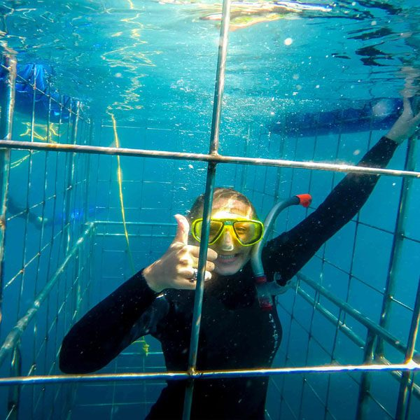 Shark cage diving durban