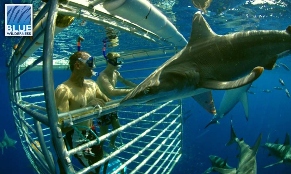 SHARK CAGE DIVING - This is your perfect next shark adventure. You may be able to swim like a dolphin and love the ocean, but the shark has to know your personal space. A set of big bars dividing those spaces is a sure fire way to ensure boundaries are respected... right!
