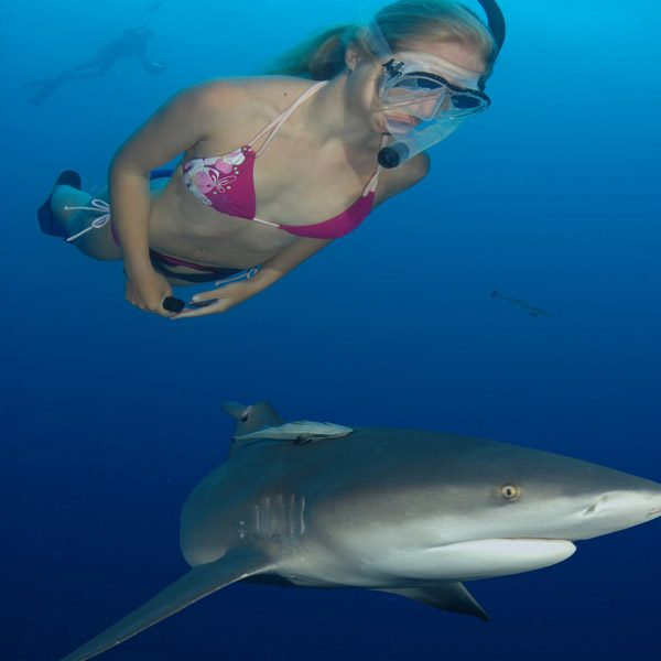 Swim with sharks at aliwal shoal1