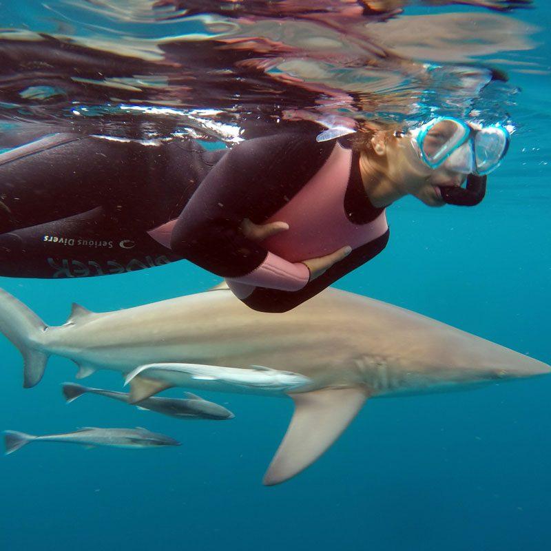 Shark Snorkeling in Durban